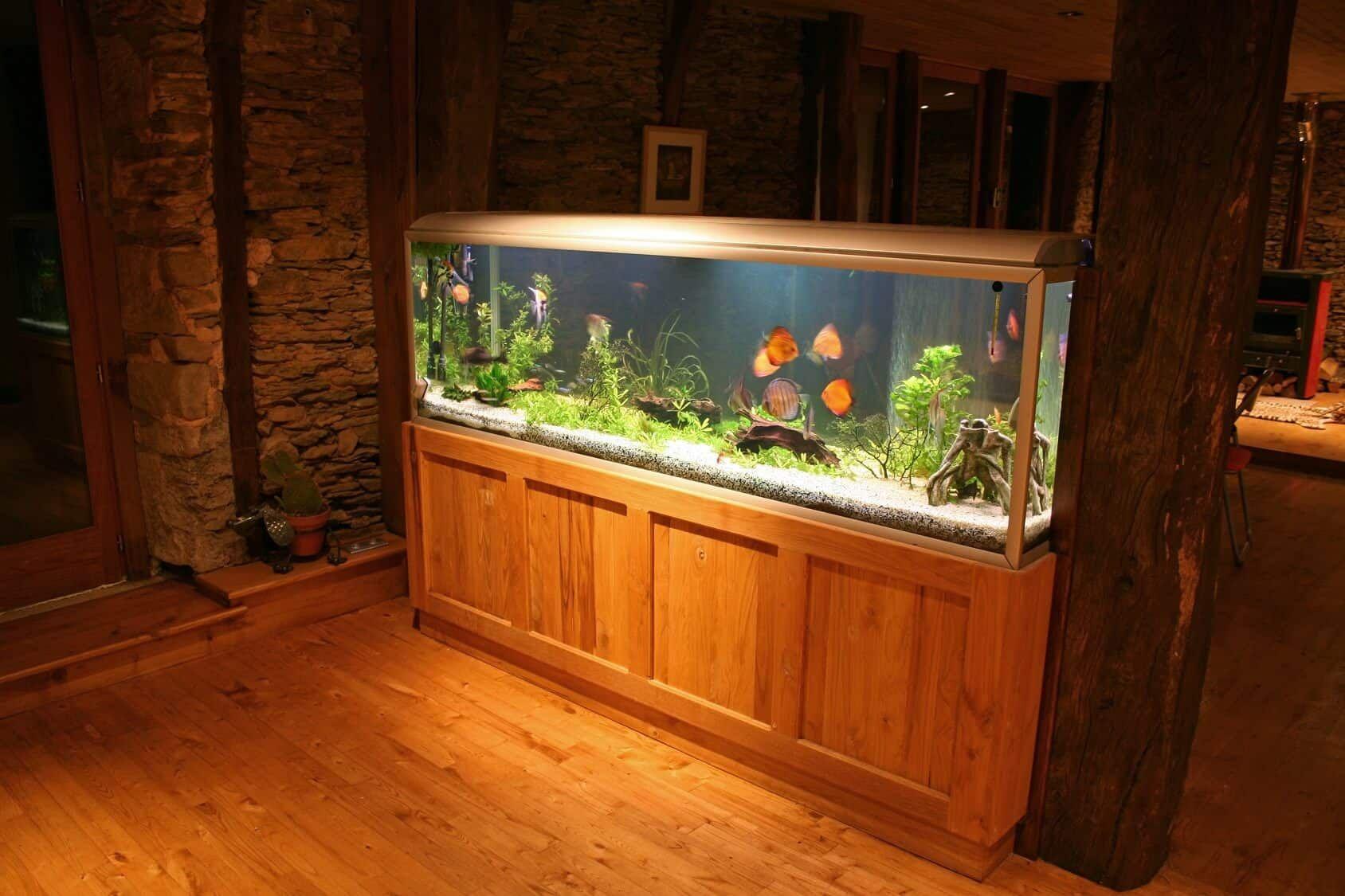 55 gallon fish tank guide best fish setup ideas
