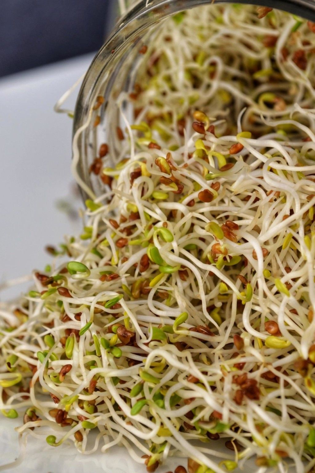 How To Grow Sprouts From Seeds You Will Be So Amazed To See How Quickly They Grow A Great Addition To Sandwiches Sal In 2020 Growing Sprouts Sprouts Sprouting Seeds