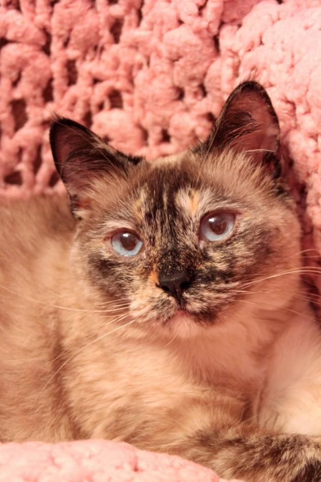 Adopt Bridget On Petfinder Crazy Cats Ginger Cats Humane Society