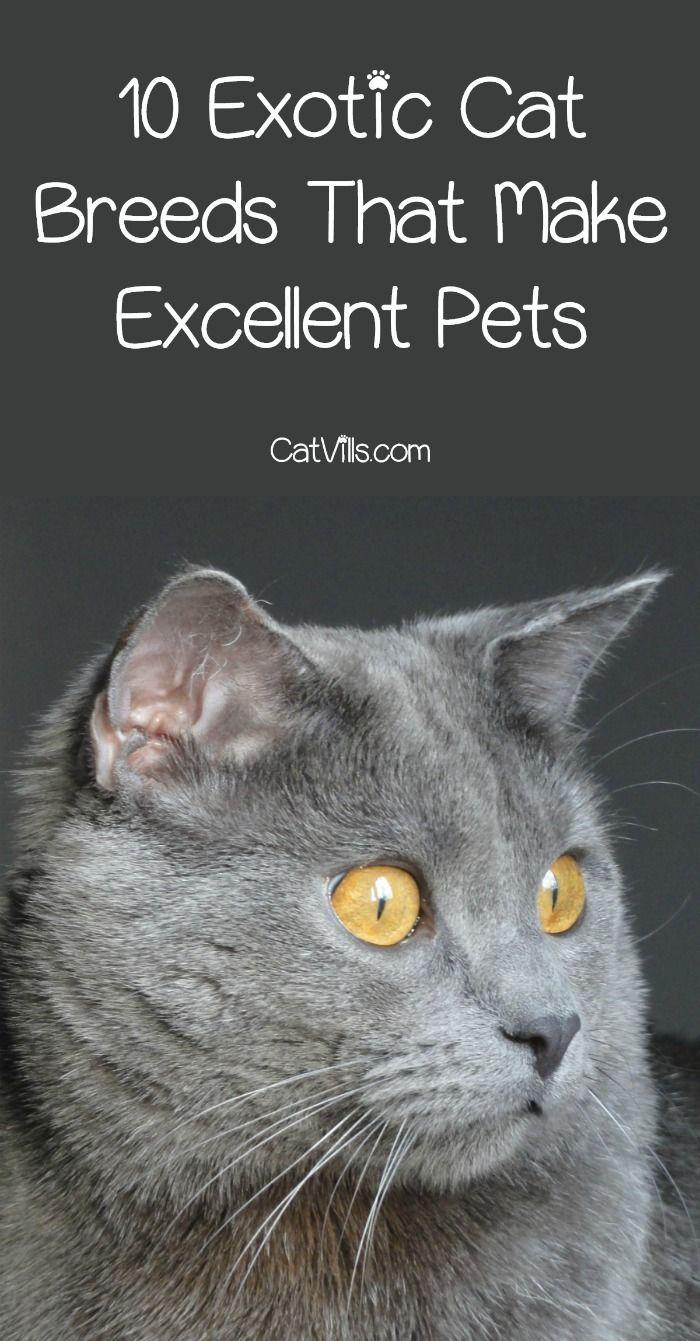 Pin On Smart Pets