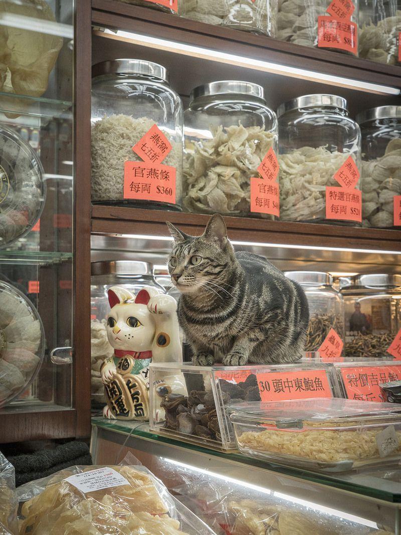 Charming Portraits of Hong Kong's Shop Cats Bodega cat