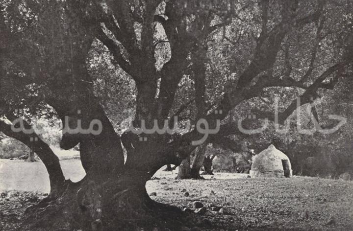 زاوية غريبة في غابة في جبال خمير الحق ماعندي حتى فكرة مازالت موجودة ولا لا ومانعرش حتى متاع شكون Photos