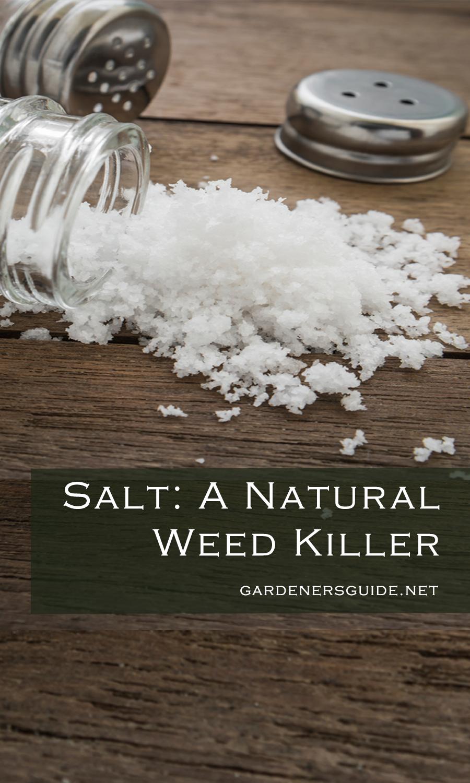 Killing Weeds With Salt #kill #weeds #salt | Backyard