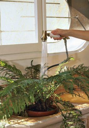 Comment Soigner Ses Plantes D Interieur En Hiver Plante