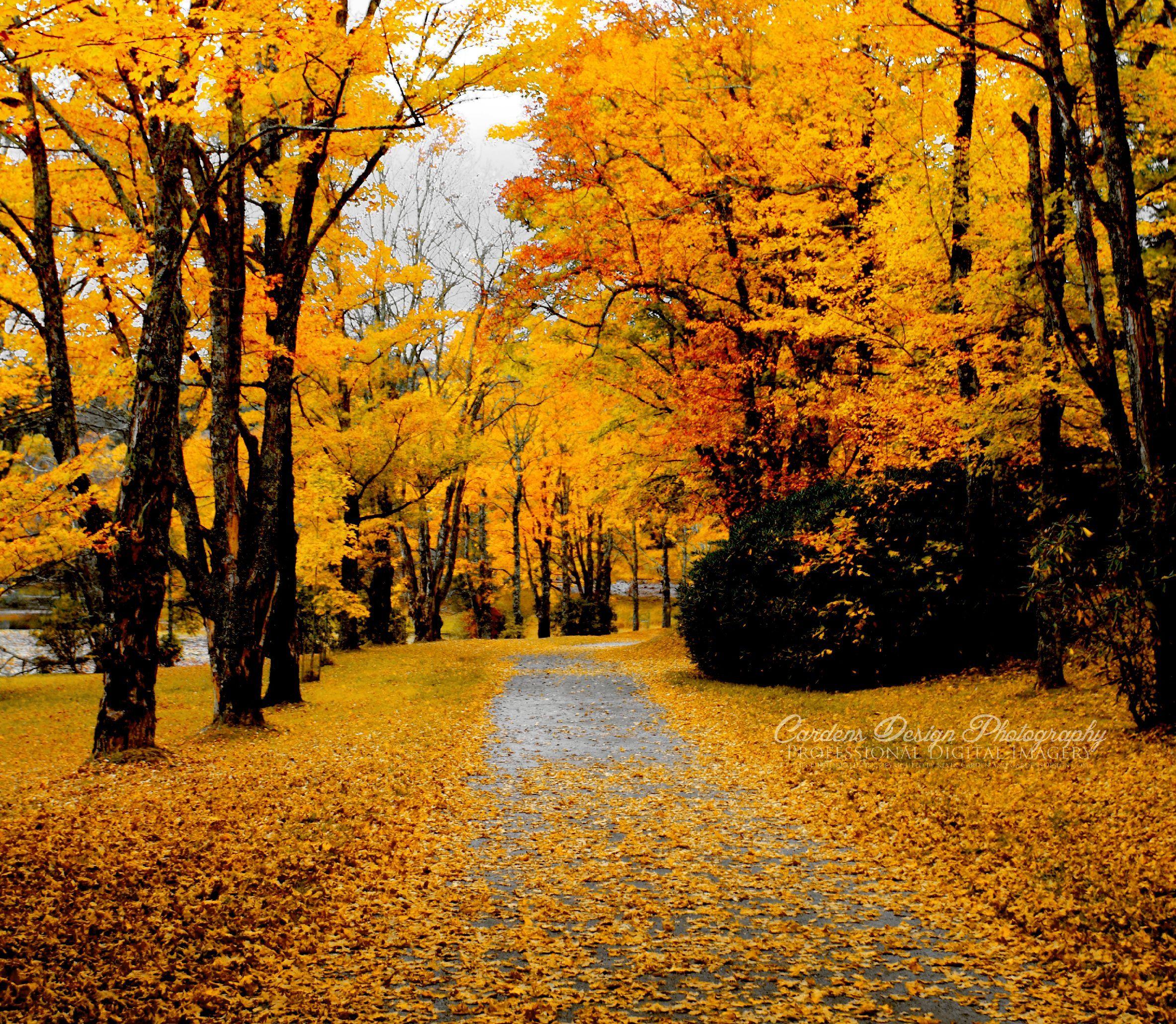 Carolina Autumn Blue Ridge Parkway Maple Leaves Trees ...