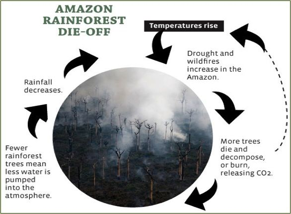 Amazon Rainforest Die Off An Example Of Reinforcing Feedback