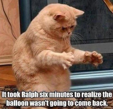 70 Funny Cat Pictures