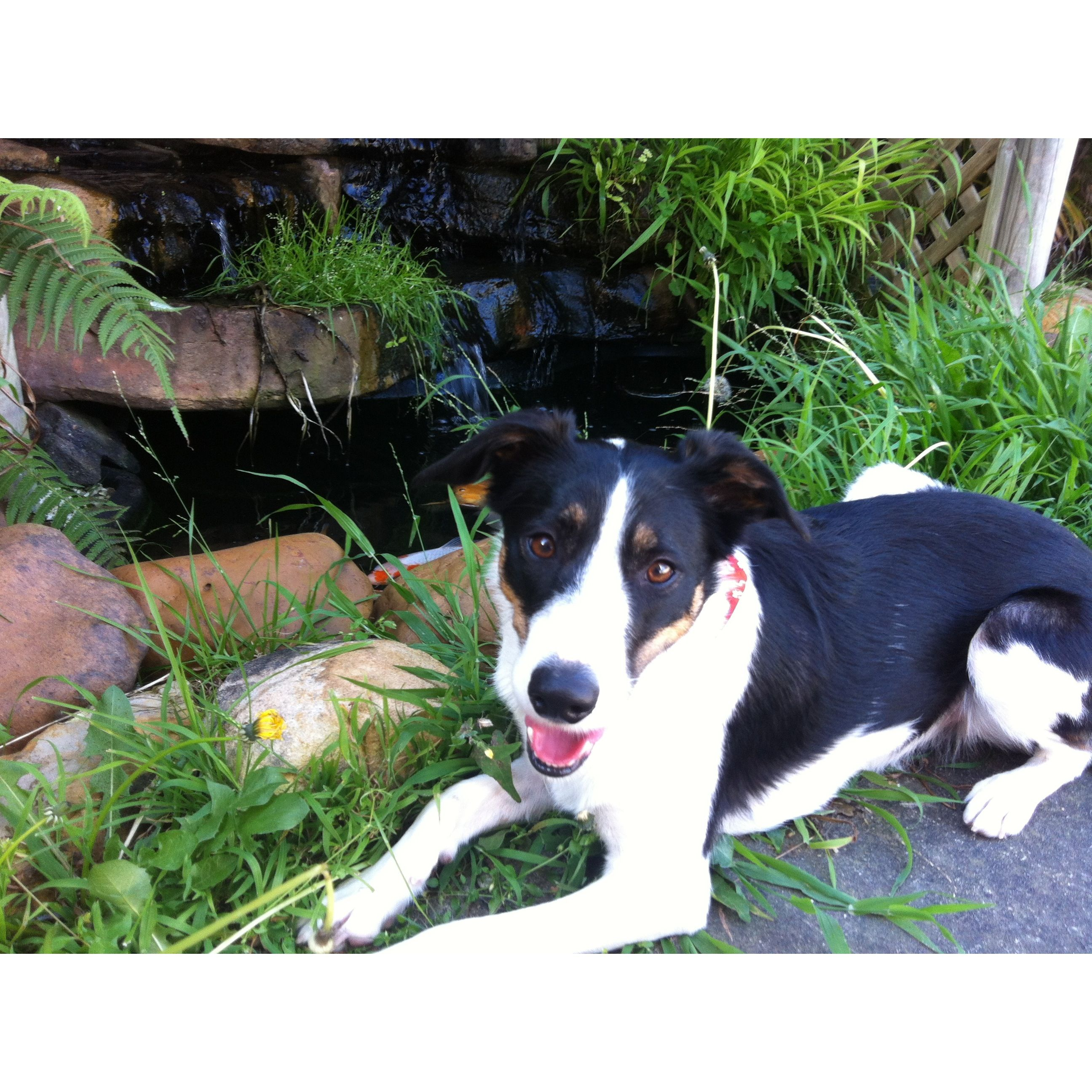 My dog Lucy <3