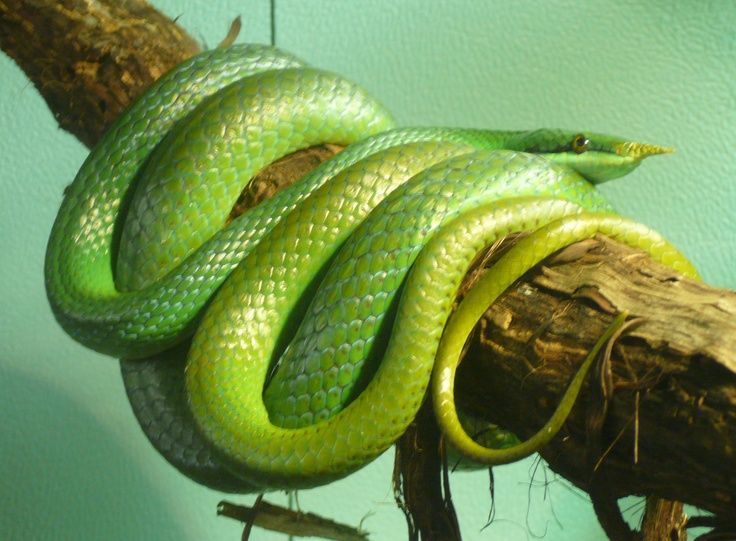 Image Result For Types Of Green Snakes Small Snakes Snake