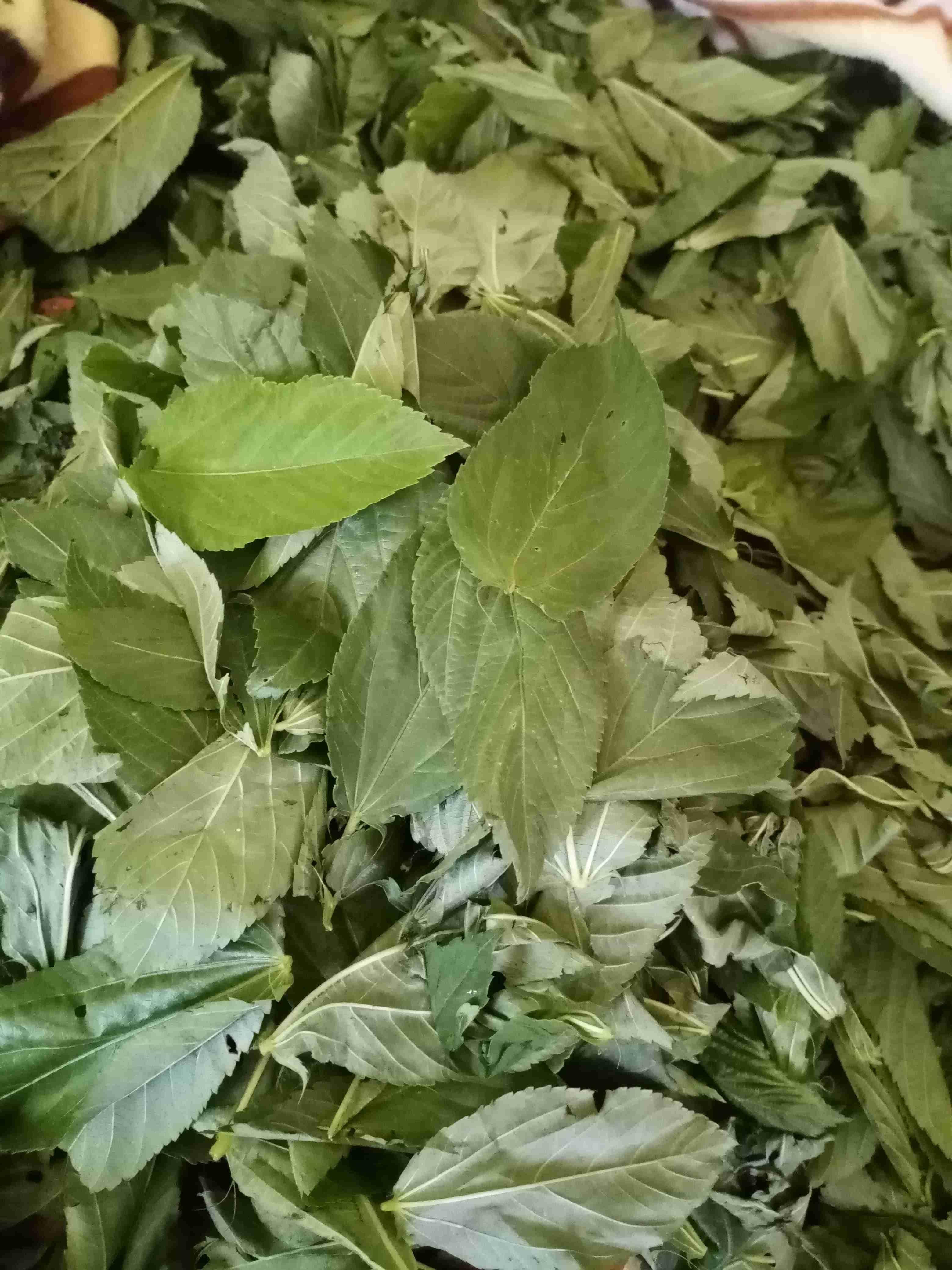 الملوخية واسرارها ملكة المطبخ زاكي Vegetables Main Dishes Spinach