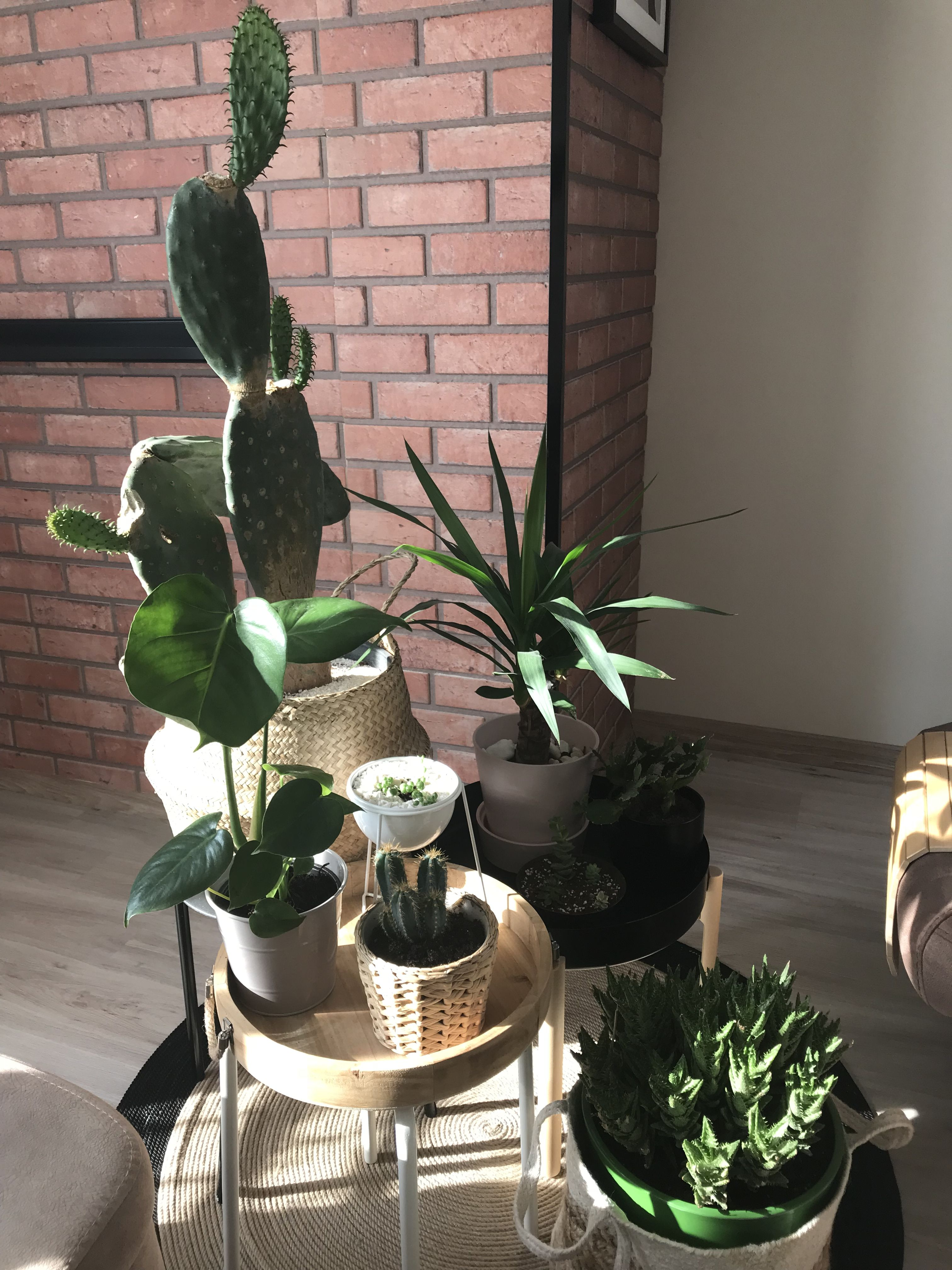 Home Decoration Plants
