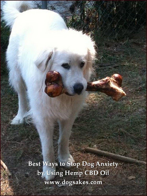 Organic Dog Food Prolong Dog S Lifespan Click On The Image For