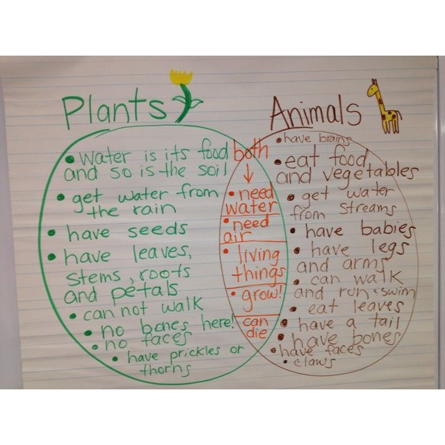 Comparing Living Things  Plants And Animals Venn Diagram