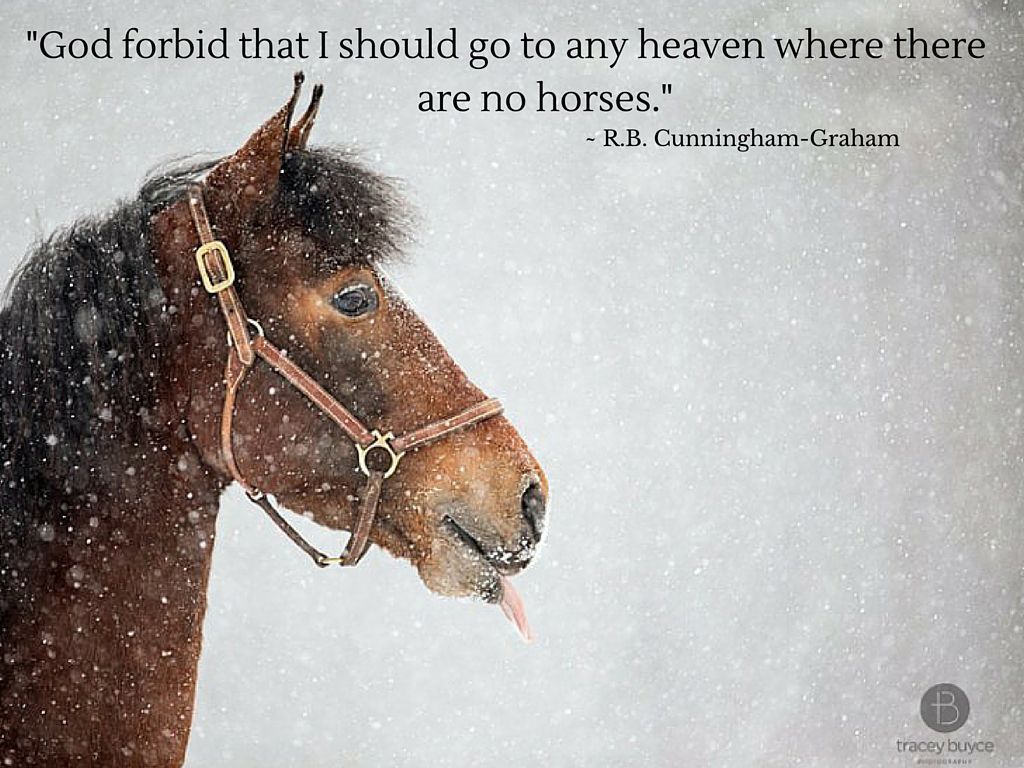 Cute Horse Quotes: Winter Horse Photography And Horse Quote In Saratoga