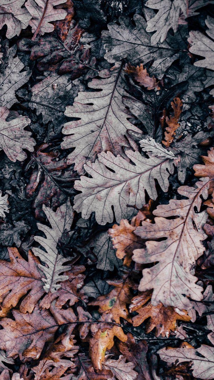 Herbstliche Farbinspiration #blätter #herbstfarben