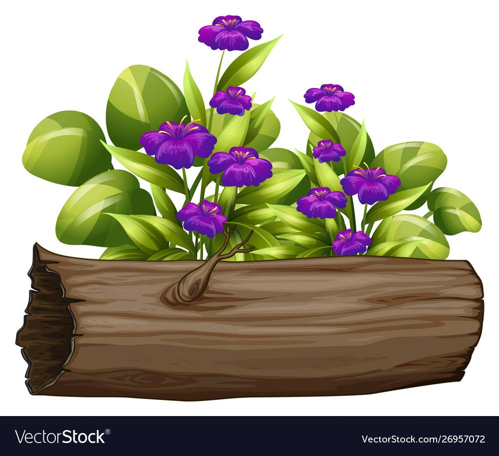 Little purple flowers on white background vector image on