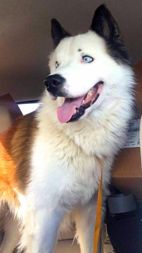 Adopt Malakai On Animals I Want To Adopt Dogs Cute Animals