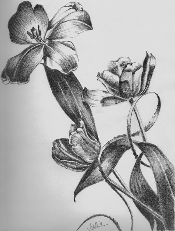 Flower pencil drawing