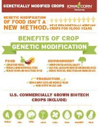 The Truth Benefits Of Gmo Crops Plant Science