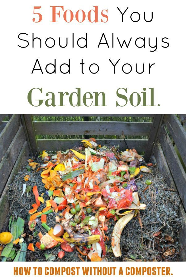 Food Scraps In Garden Soil
