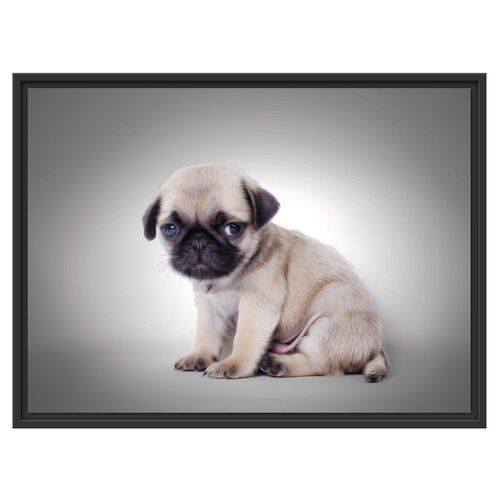 East Urban Home Pug Puppy Against A Background Framed Graphic Art