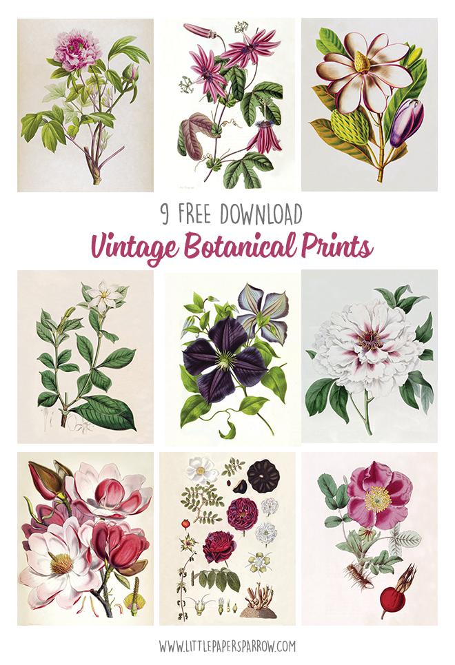 Beautiful Vintage Botanical Illustrations Of Magnolias Roses Clematis Peonies And Gard Botanical Illustration Vintage Botanical Printables Botanical Prints