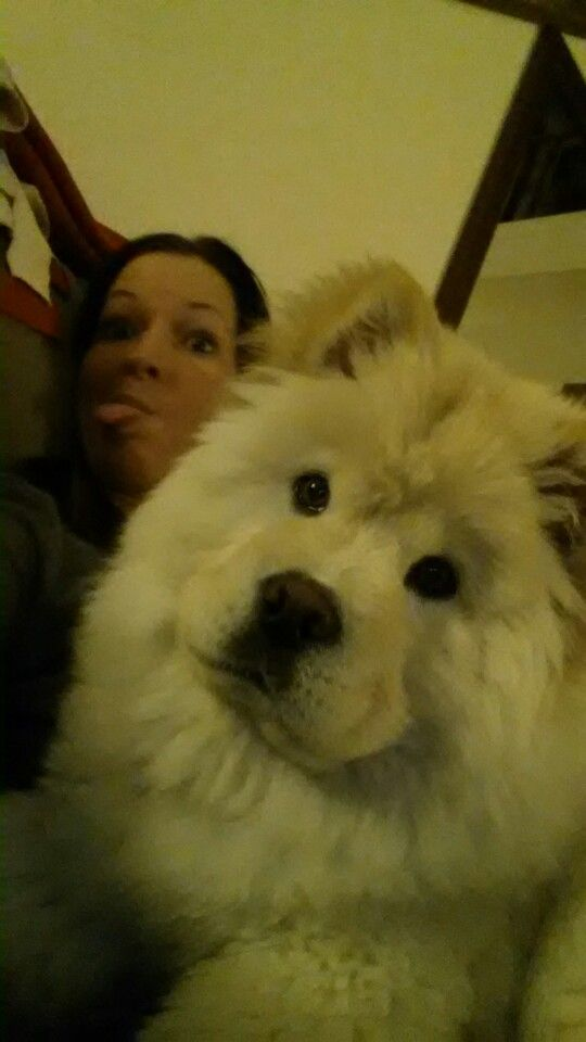 Pin On Aspen The Chow Chow