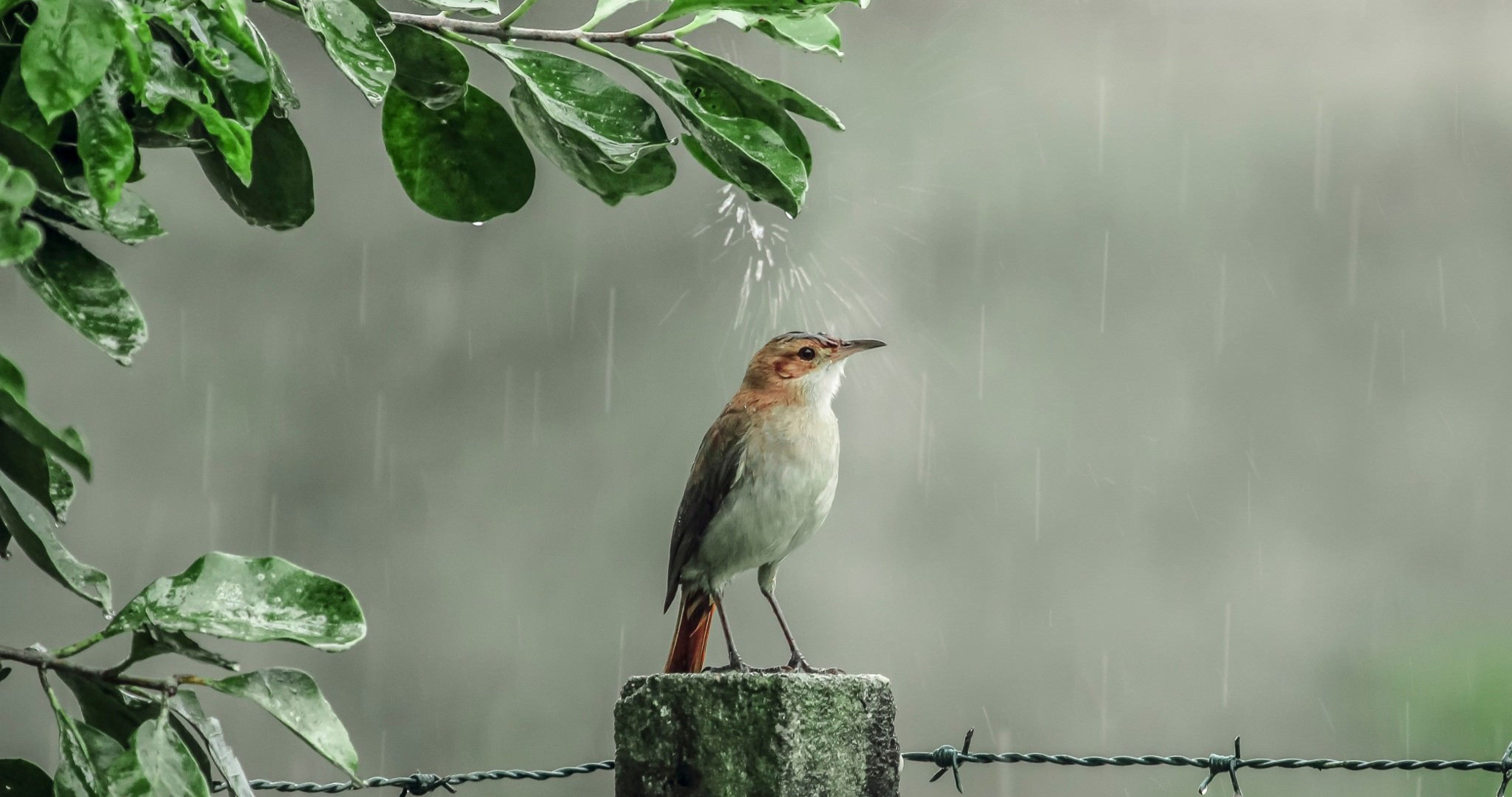 Bird On Rain 4k Ultra Hd Wallpaper Rain Wallpapers Wallpaper Pictures Beautiful Birds