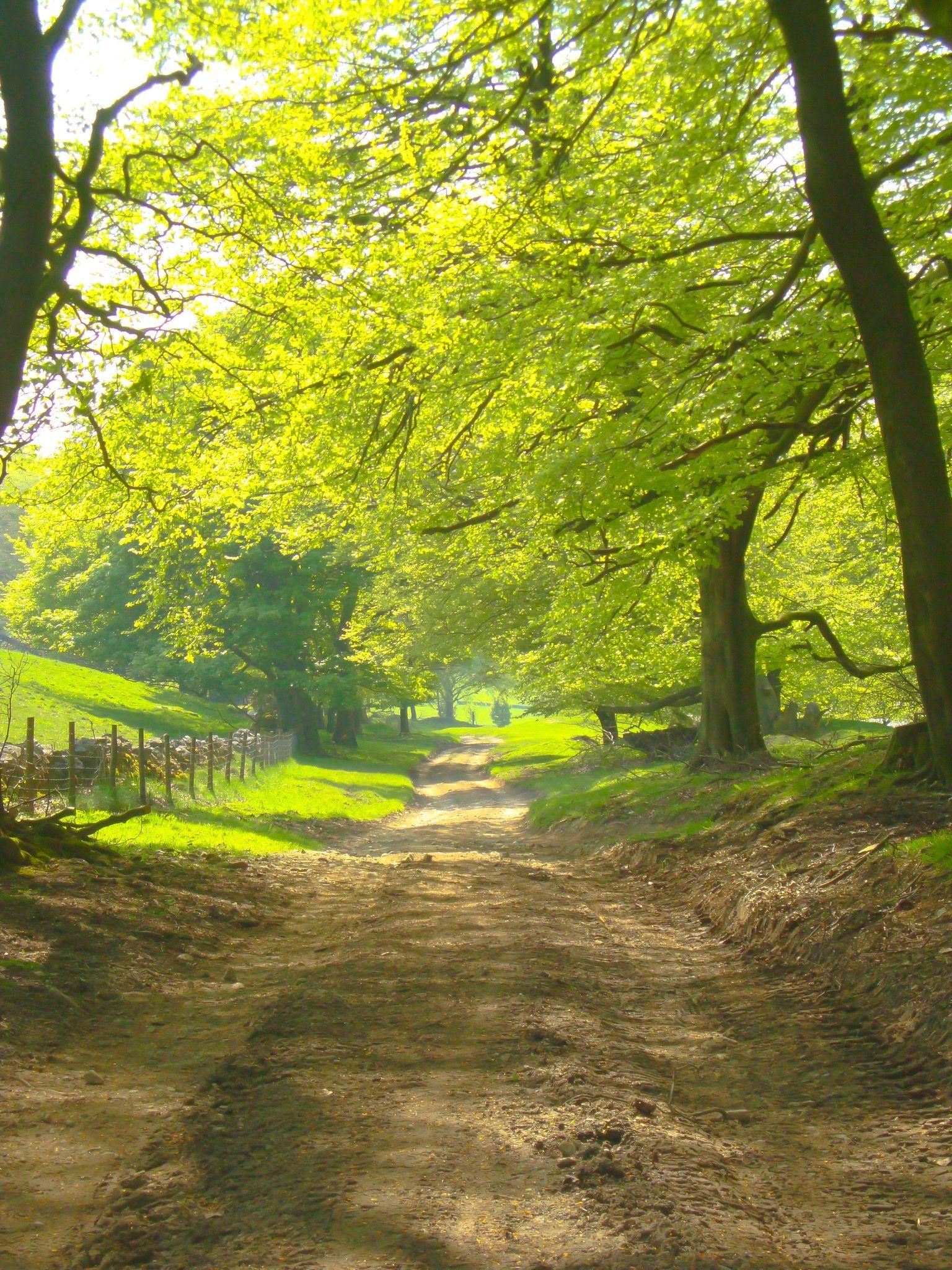 Country lane (Castleton, Derbyshire, England) by Alex Donahue