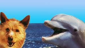 From The 1997 Movie Zeus And Roxanne The Dolphins Real