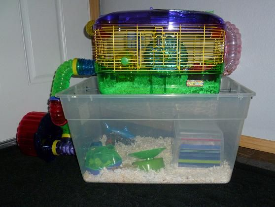 Connecting Two Cages Together Hamster Diy Cage Hamster Bin Cage Dwarf Hamster Cages