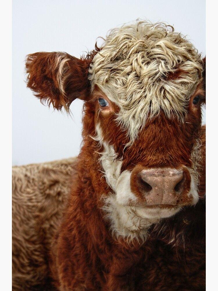 12++ Fluffy cow stuffed animal ideas