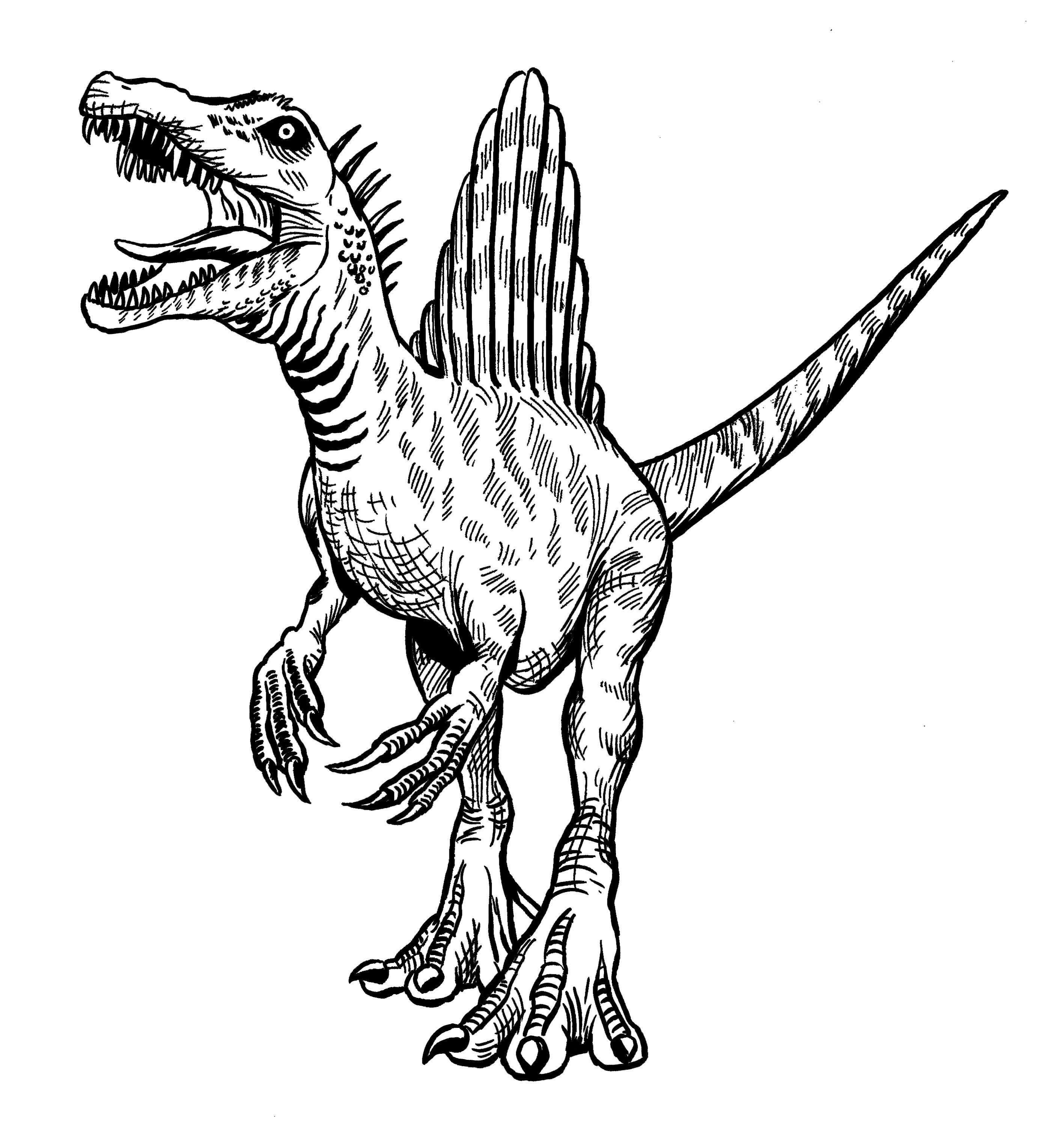 Black And White Spinosaurus Dinosaurs Illustration