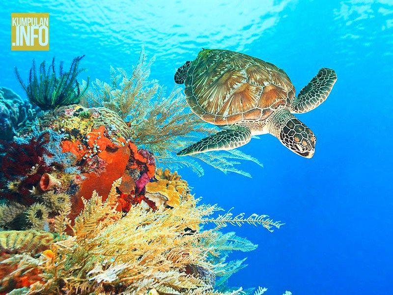 Menikmati Keindahan Taman Laut Bunaken Gambar Kota Manado Indonesia