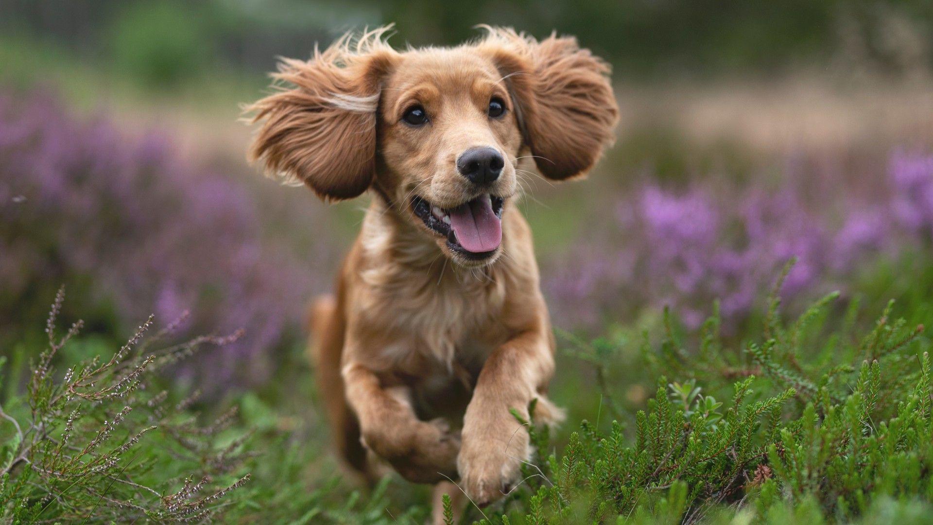 Cute Pets Hd Wallpapers For Desktop 1920 X 1080 Puppy Wallpaper Cute Laptop Wallpaper Cute Dogs