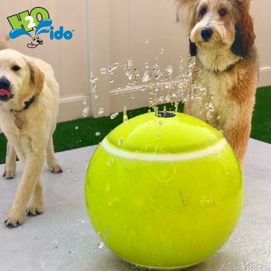 H2o Fido Has Lots Of Fun Misting And Water Play Features Like Our