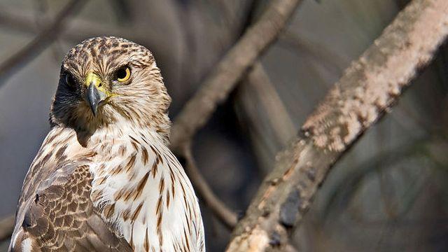 Sensacional !!! Porque as aves não gostam de assistir filmes?  Estudo demonstra que a taxa de atualização dos olhos da maioria das aves é muito maior que a dos Humanos - Dessa forma nosso cinema com seus míseros 24 quadros por segundo, são vistos como um aborrecido slide-show para nossos amigos emplumados.