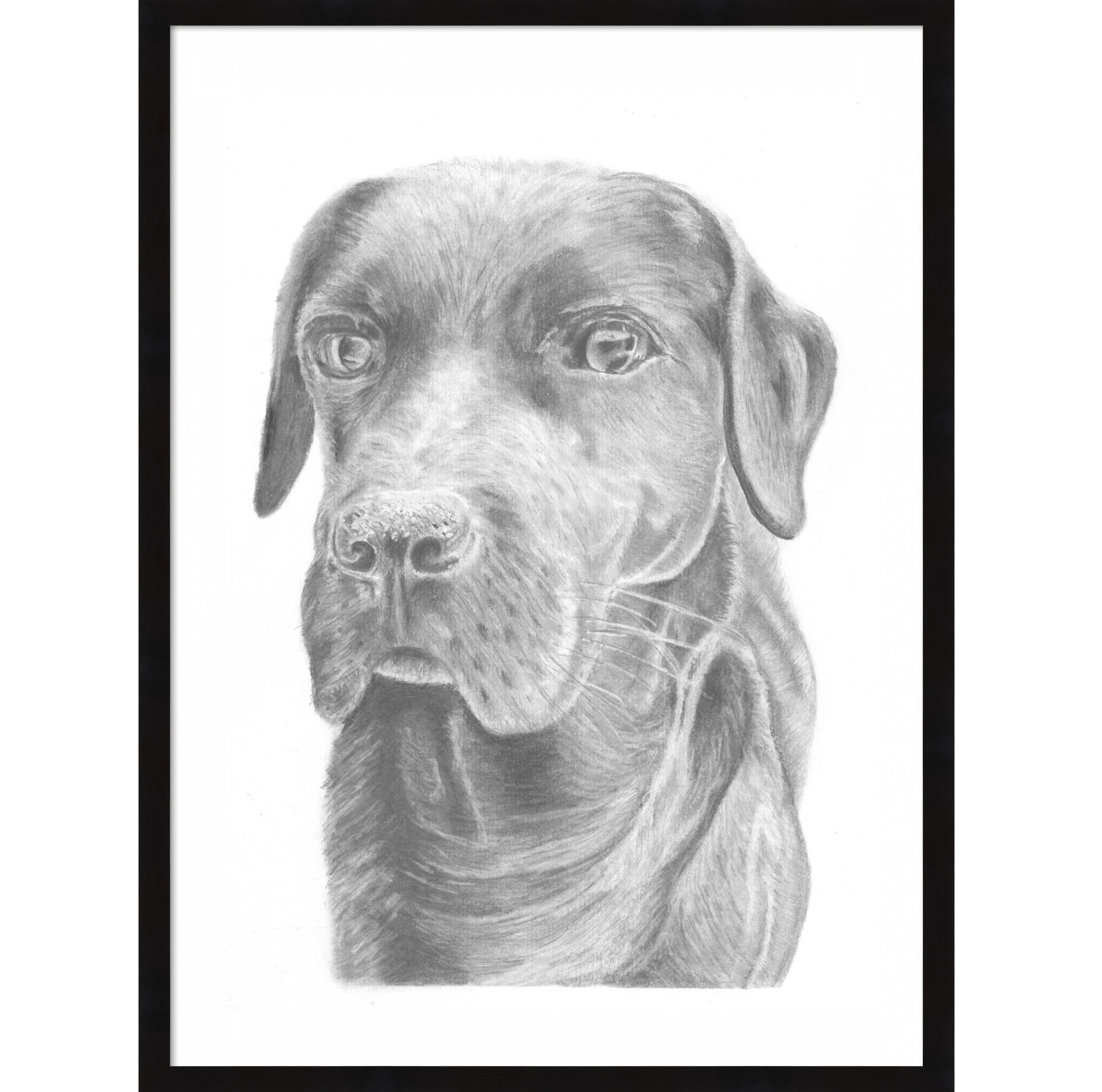 Pin By Wheesy Designs Mcallister On Drawings In 2020 Labrador Labrador Retriever Drawings