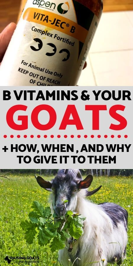 The Importance of B Vitamins With Goats | Raising goats ...