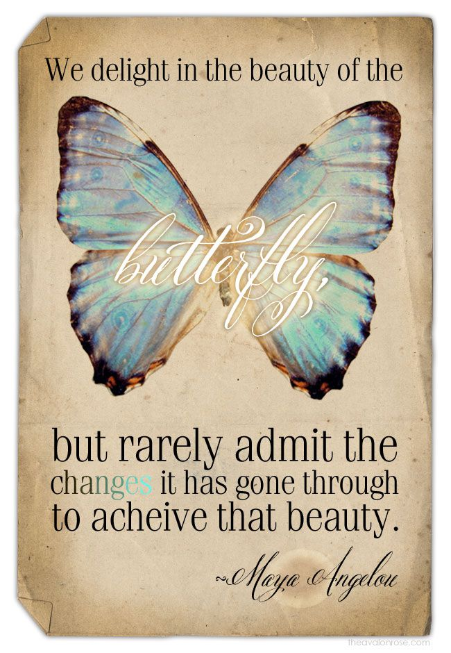 We Delight In The Beauty Of The Butterfly But Rarely Admit The