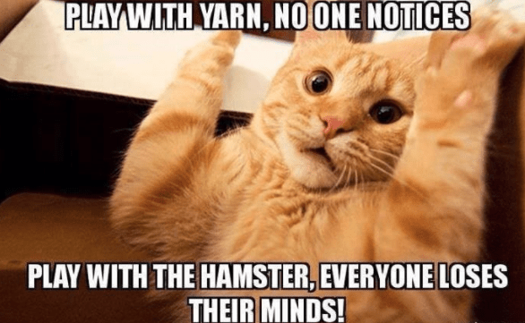 27 Funniest Cat Memes That Never Fail To Make Us Lol Funny Cat Memes Cute Funny Animals Funny Cats