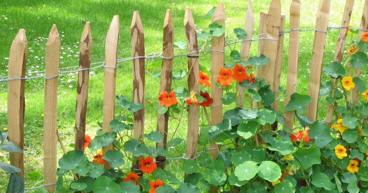Immer öfter sieht man in den Gärten die einfachen, aber optisch sehr ansprechenden Holzzäune, die oft schon nach einem Jahr ihre typisch graue Patina zeigen. Hier lesen Sie, wie Sie einen solchen Staketenzaun selbst aufstellen.