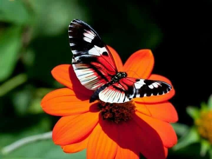 Pin von Barbara Rathmanner auf Schmetterlinge Schöne