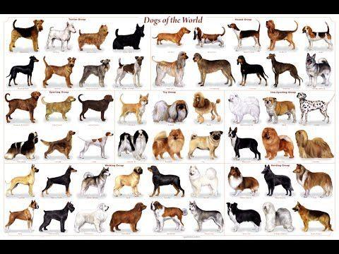 10 Razas De Perros Para Tus Hijos Razas De Perros Medianos Razas De Perros Perros Medianos