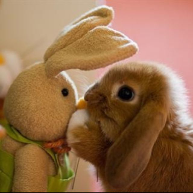 I love this bunny picture