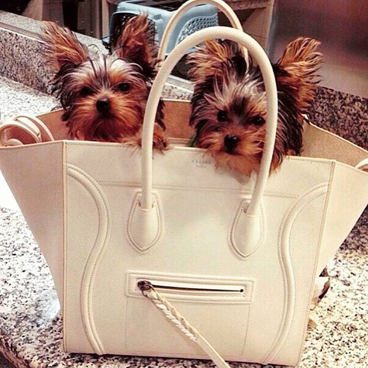 """""""#Céline Phantom being multifunctional  ©bycamelia picture indicated by @luxdict"""""""