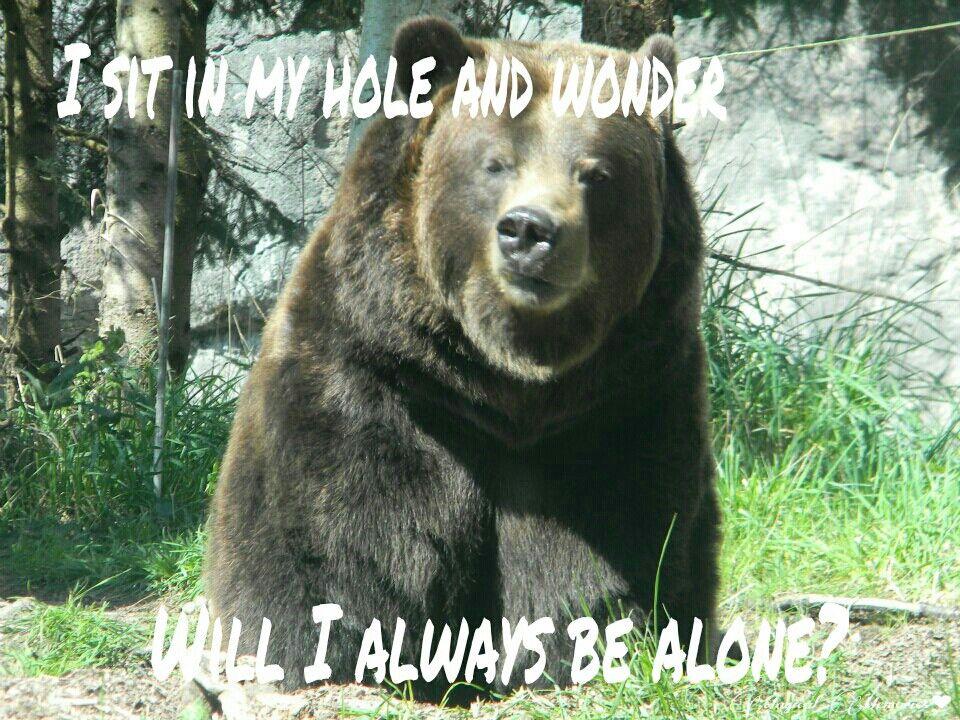 Will I Always Be Alone Ponder Bear Meme Funny Humor Bear
