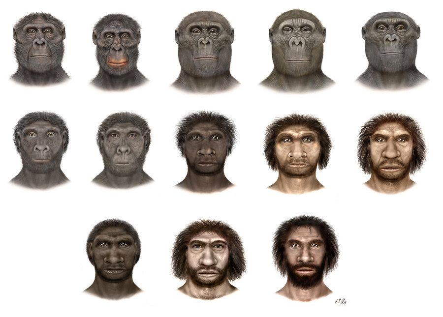 hominidae the history and science of our earth pinterest