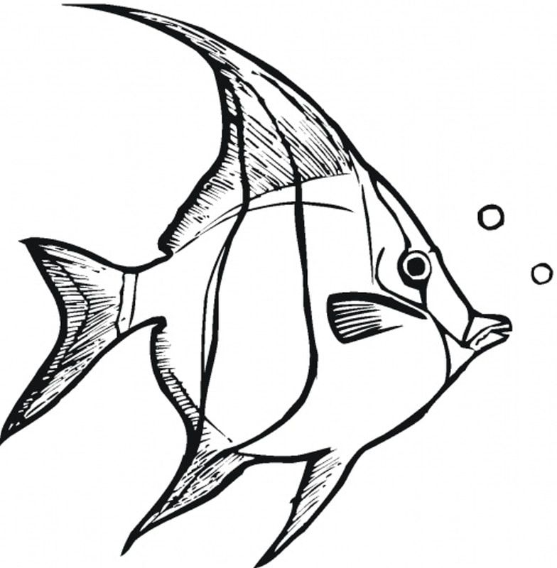 Lessons Fish Coloring Page Angel Fish Unicorn Coloring Pages