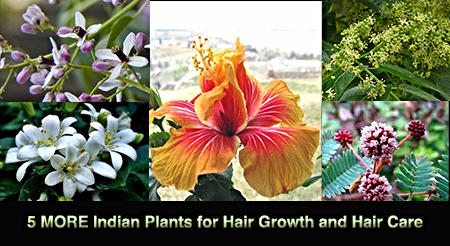 5 MORE Indian Plants for Hair Growth and Healthy Hair Care ...